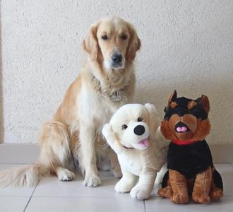 Vanille, Chocolat et ma chienne Iza